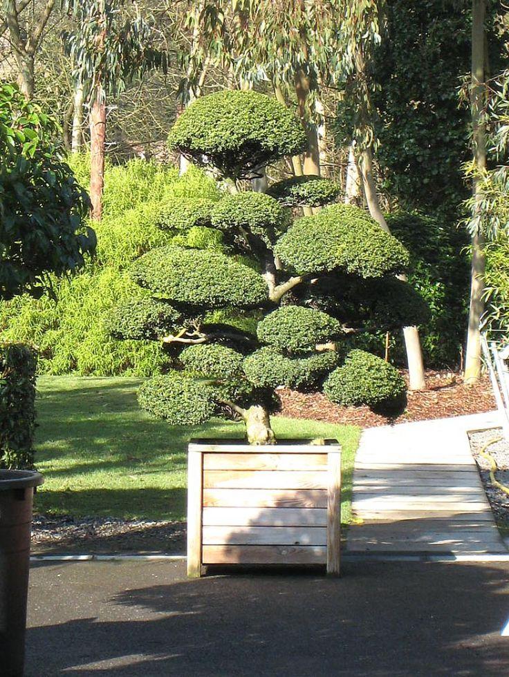 Les 14 meilleures images à propos de référence arbre sur pinterest ...