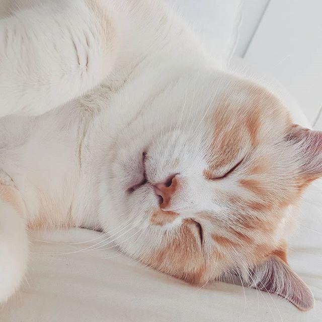 Heureux. #cats #catsofinstagram #albertchamus