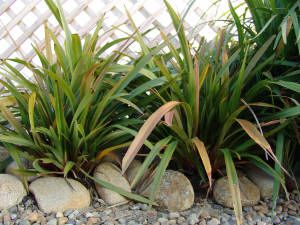 Abulk native plants, grass, buffalo turf and other instant lawn
