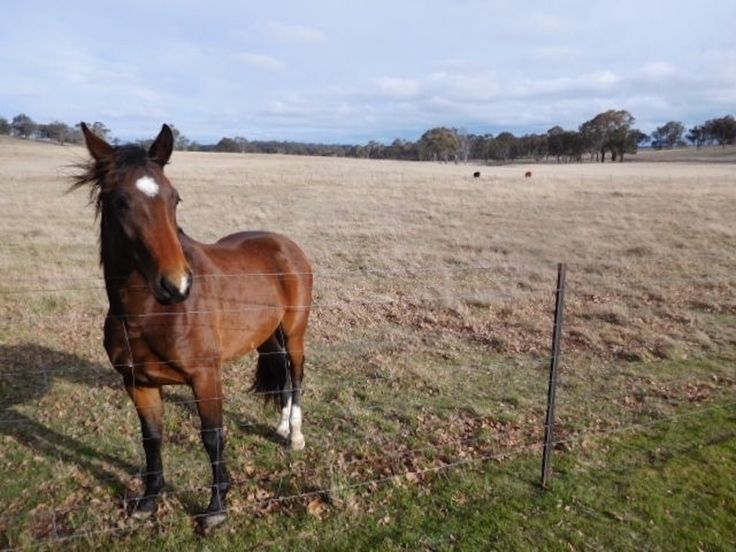 From a lifestyle perspective, this rural holding ticks all of the boxes.   #NewSouthWales #Armidale #ForSale #HorseProperty #RealEstate