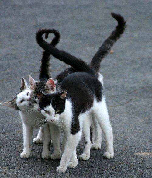 Best friends...... #cats