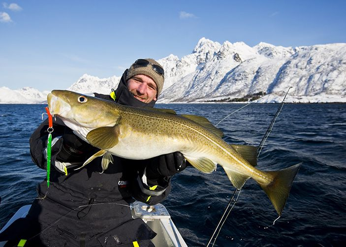 7 nights in a Cabin for four people, self-catering, 2-hours snowmobile tour, 3-hours dog-sledding tour, 3-hours snowshoe tour, daily deep-sea fishing by boat £ 540.- / 680.- € / 5 690.- NOK per person
