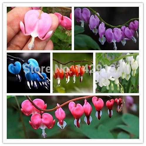Купить товар150 шт в форме сердца цветок семена Dicentra spectabilis сладкий в форме сердца бумажник пион цветы для сад растение в категории Карликовые деревьяна AliExpress.                  Добро пожаловать в наш магазин                     Качество-это ваш единственный выбор.  Потому ч