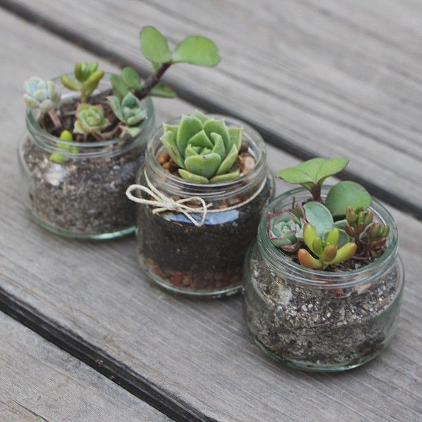Tiny Succulents In Baby Food Jars And More Fun Ways To