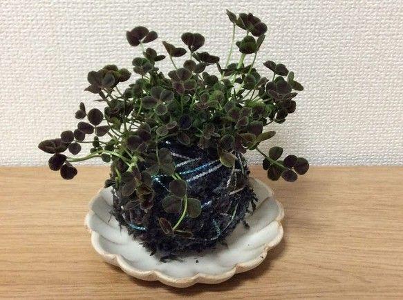 彩り苔玉【四つ葉のクローバー】 フラワー・リース BLOOM&FLOWER ハンドメイド通販・販売のCreema