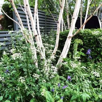 The Middle-Sized Garden - » The 8 best perfect-for-privacy garden trees