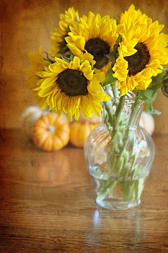 sunflowers- can't wait to plant mine again in the garden.  My favorite summer flower. Makes me smile.