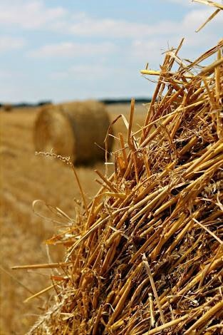 Hay was a big part back then. People needed it for their animals so they can eat. If people didn't have these bails of hay then all of the animals would either die or have to eat something else