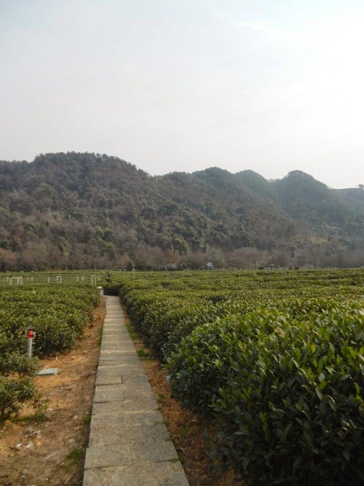 Podróż do Hangzhou, zobaczenie Zachodniego Jeziora, pól uprawnych herbaty Longjing, życie w artystycznym domu, poznanie lokalnych zwyczajów