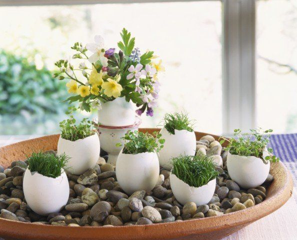 Mini herb garden as Easter decoration