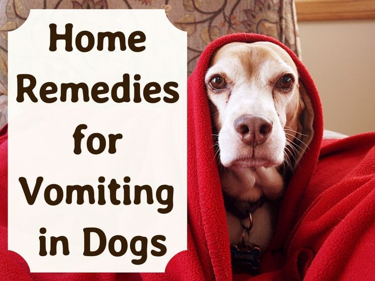 Effective Home Remedies For Vomiting Dogs Dog Upset Stomach