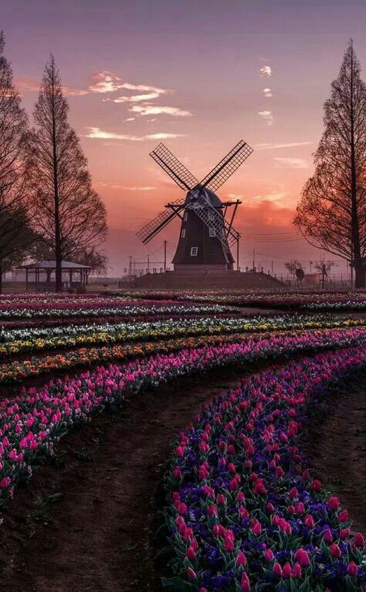 Keukenhof Park Holland The Netherlands Rainbow hued fields
