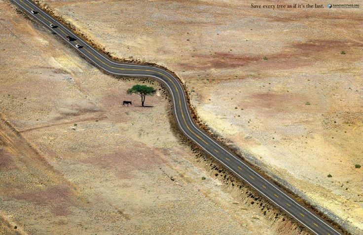 Save every tree as if it's the last.