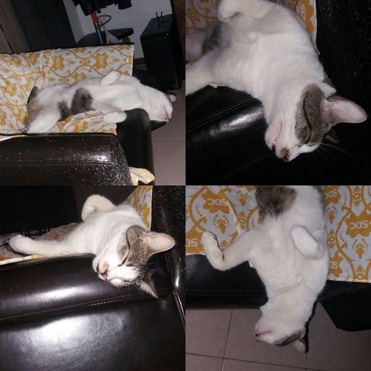 leo #thehousecat he Don't give a shit #gatti