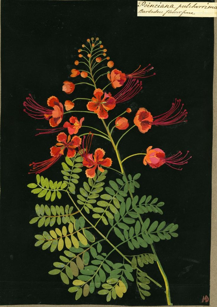 Mary Delany, collage artist of flowers in the 1700's
