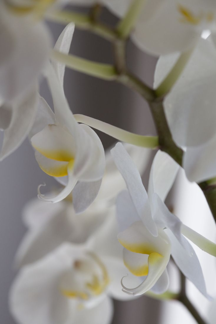 f62138021d5f53031e99d167e9d68679 - How To Get An Orchid To Bloom A Second Time