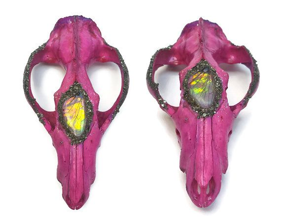 This real opossum skull has been stained a gorgeous bold magenta hue. A perfectly preserved Dragons Breath fairy wing has been placed on the skull and accented with crushed pyrite. Light glitters also flicker across the skull. It doesnt have bottom jaws, and is missing some top teeth as well as a back portion of the skull.  This possum skull measures approximately 4.5 inches long.  This crystallized real animal skull would make a lovely addition to any home as animal skull decor. It can be…
