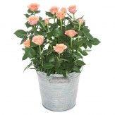 Vous voulez faire livrer un magnifique bouquet de fleurs à la femme que vous aimez ?   #envoyerdesfleurs, #livraisondefleurs, #livraisonfleur