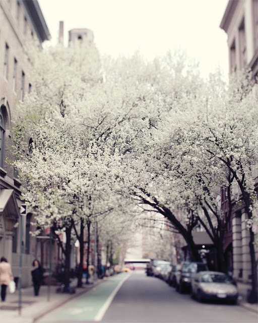 NYCandy Trees, New York Cities, Candies Trees, Photography Blogs, Beautiful, Cities Street, Fine Art Photography, Winter Love, Blossoms