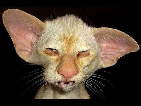 8 Ugliest Cats In The World - Scary Stuff - YouTube ...