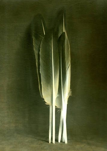 Olive Green & Cream - Feathers