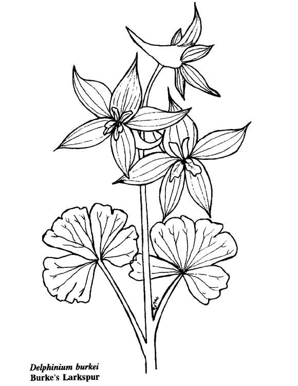 Flowers And Plants Coloring Pages Coloring Pages Adult Coloring