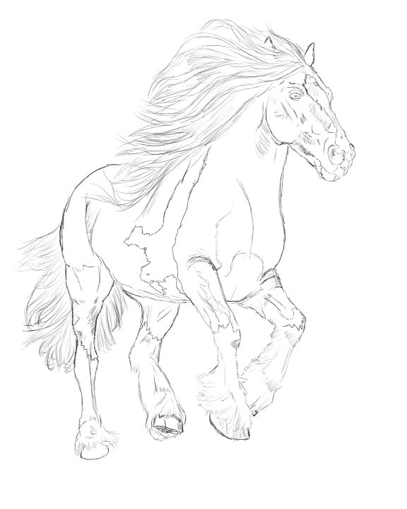 1415 best Horse Coloring Pages images on Pinterest Horses - best of welsh pony coloring pages