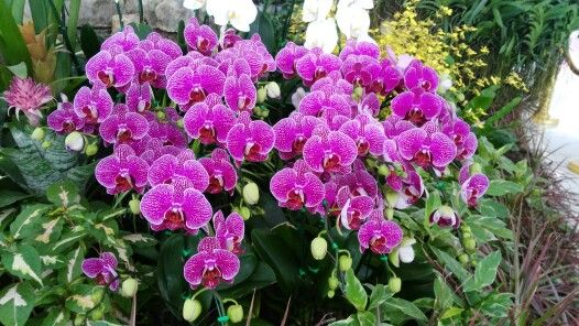 Orchids lover