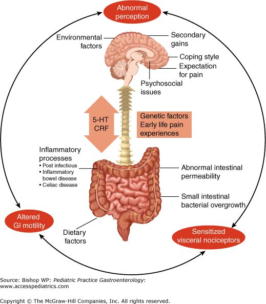 Enteric Nervous System                                                                                                                                                     More