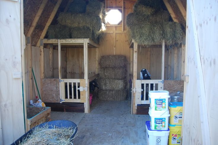Goat House Interior Horse Cow And Goat Care Pinterest