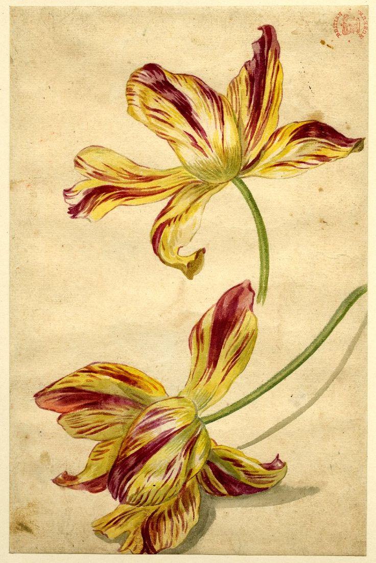 best Jan Davidzvan Huysum images on Pinterest Floral bouquets