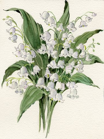Joy Waldman WATERCOLOR Lily Of The Valley