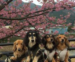 """Beautiful Japanese """"Doggy"""" picture!^^   via Facebook"""