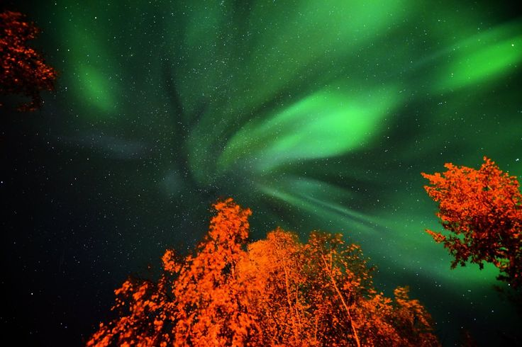 Photo by Gary Kallberg, Fox, Alaska, Sept 15, 2017  Fall leaves and auroras make stunning colors.