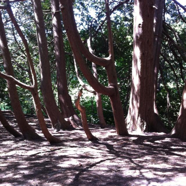 Interesting Trees at Springbank Park