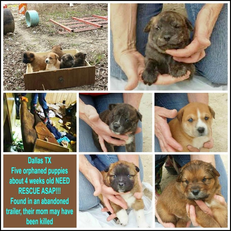 Dallas TX: $100 pledged. Five 4 wk old orphaned puppies NEED RESCUE ASAP...