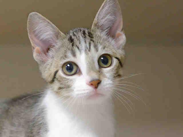Pet Adoption At The Dumb Friends League Denver Co Dumb Friends League Pet Adoption Dumb Friends League Adoption