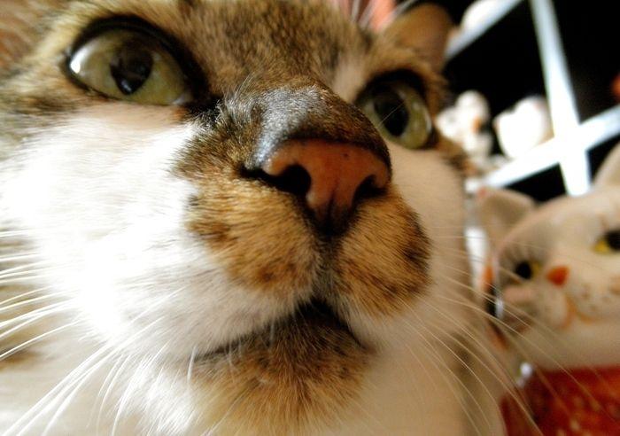 招き猫トセイ