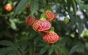 Resultado de imagen para imagenes de plantas exoticas