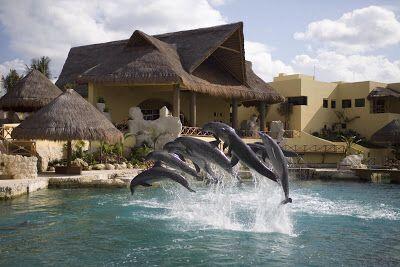 Dolphinaris, Cozumel, Mexico