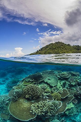 Half above and half below view of coral reef at Pulau Setaih Island, Natuna Archipelago, Indonesia, Southeast Asia, Asia