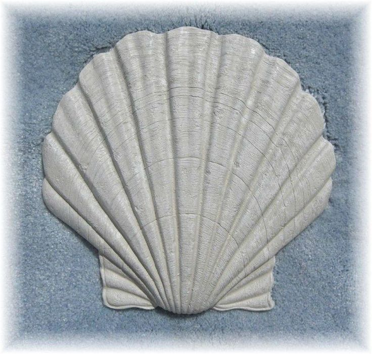 Details About Clam Sea Shell Nautical Stepping Stone