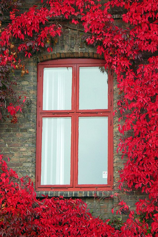 red window & leaves