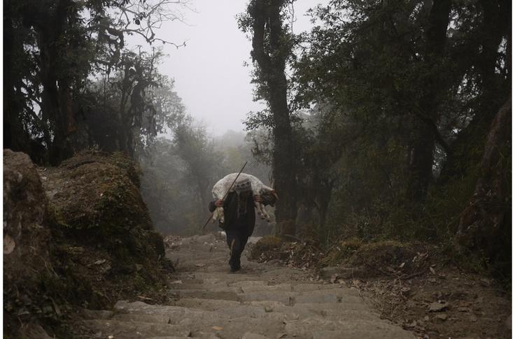 No stragglers - Ghorepani and Poonhill circuit, Nepal 2012