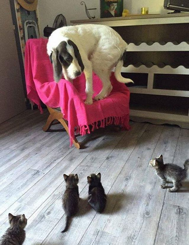 Fantastic Four Cat Style