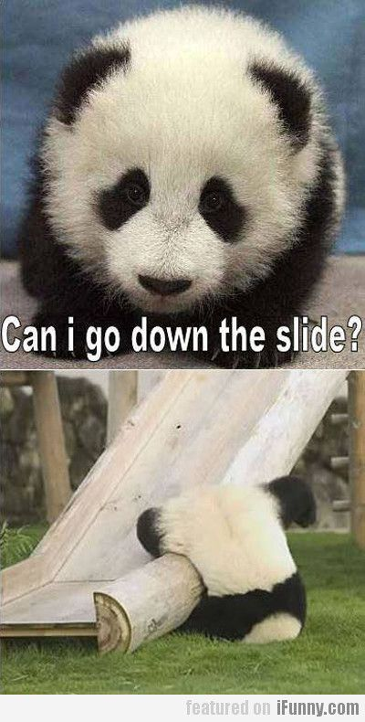 Can I Go Down The Slide?