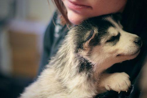 awwwwLittle Puppies, Dogs, Best Friends, Siberian Husky, Pets, Baby Husky, Cuddling Buddy, Husky Puppies, Animal