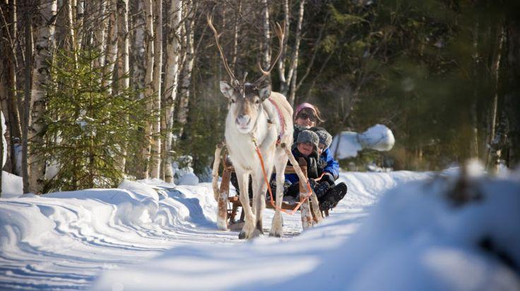 Reindeer safari to ice fishing lake -Rovaniemi, Lapland, Finland