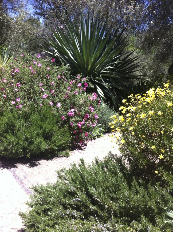 1000 images about high desert gardening ideas on Pinterest