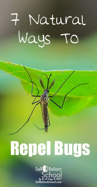 #beselfreliant Seven ways to repel bugs using natural methods - without using harsh and dangerous chemicals.